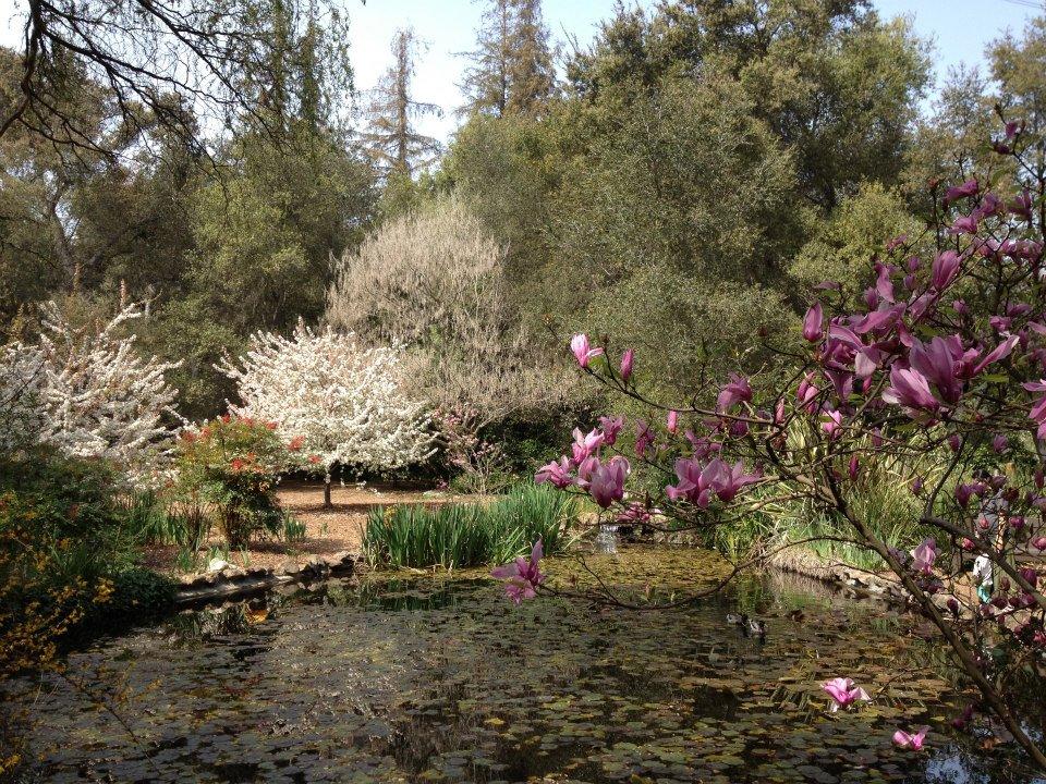 2013 Cherry Blossom Festival At Descanso Gardens Kismet Happens